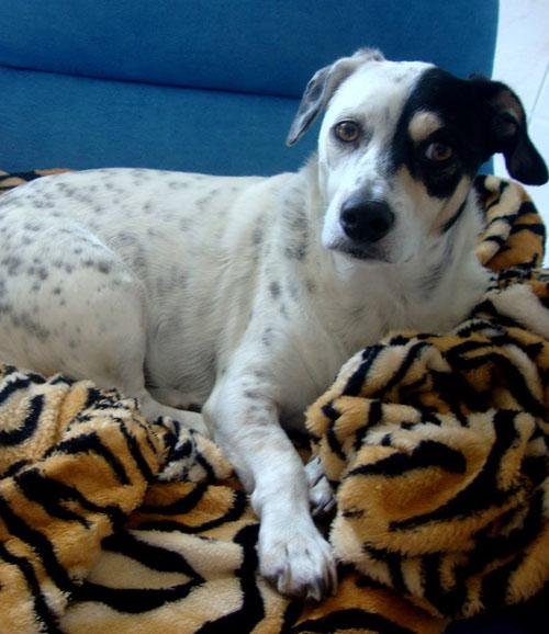 Foto de Amigo cão – por Pylla Kroth