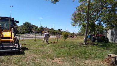 Foto de AMBIENTE. UFSM promove o plantio de espécies nativas no campus de Camobi e Avenida Roraima