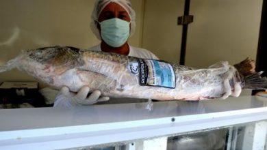 Foto de CIDADE. Após passar por manutenção, Caminhão do Peixe volta a comercializar pescados nesta semana